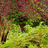Swinton Park Estate, England  - Stunning Colors