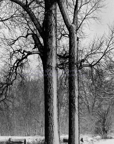 glass20March 03, 2010DeLoyd J Huenink1920 x 2444
