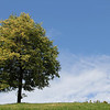 Lonely Beautiful Tree on Hill Top