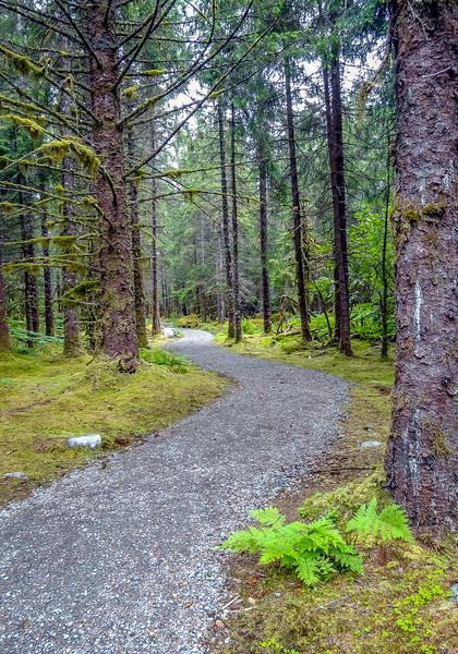 Path to Mendenhall Glacier, Alaska