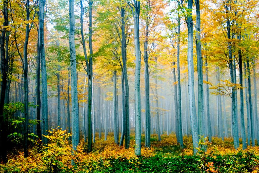 Fall Colors- Lockenhaus, Austria