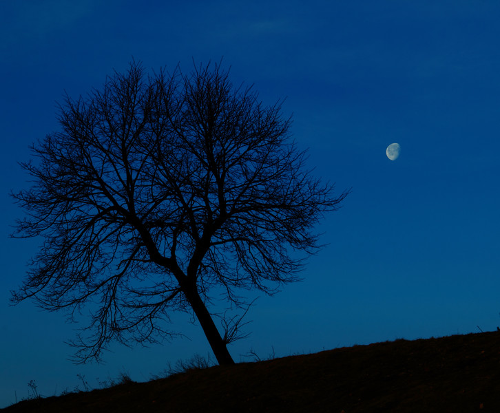 Lonely Night Tree