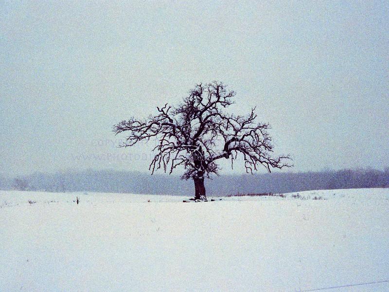 20060127-tree3