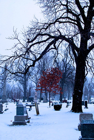 Forest Lawn Tree in Winter<br /> Buffalo, NY<br /> Jan 2012