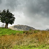 Very Windy and Rainy, 'the Solitary Tree' - Lake District, England