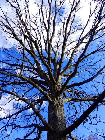Nashville Tree 3
