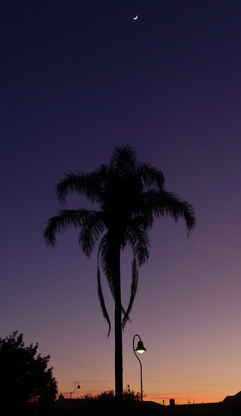 Moon, palm tree and sunset in Fremont.