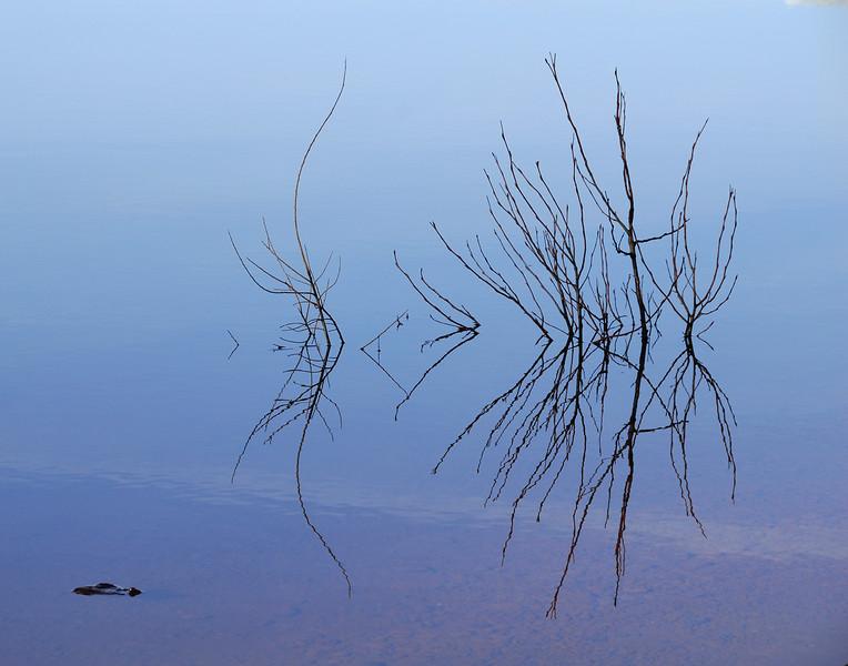 Austere Beauty-