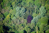 An aerial photo of a purple bush amongst a green forest.