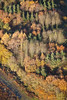 An aerial photo of very colourful trees in Autumn.