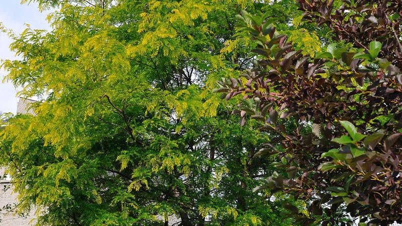 Beautiful newly born tender green tree leafs
