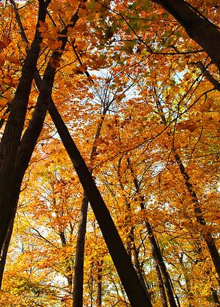 Gold Forest ~ Niagara Falls, NY