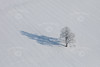 Aerial photo of a single trees and shadow in the snow.