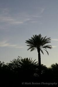 Palm Sillouhette