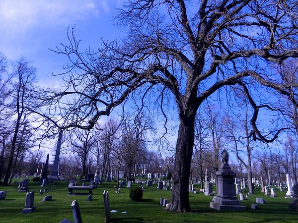 Tree in Spring 5