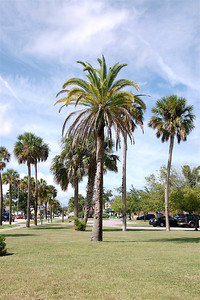 Palm Trees in St. Augustine, FL. © Nora Kramer Photography.