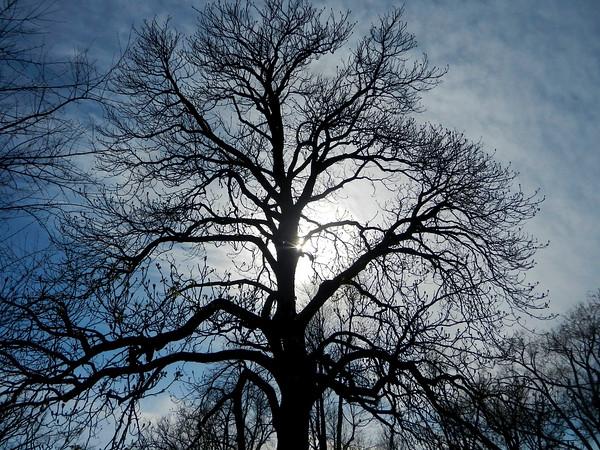 Tree in Spring 2