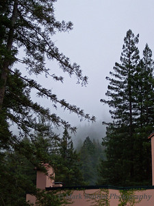 Redwood Morning Mist
