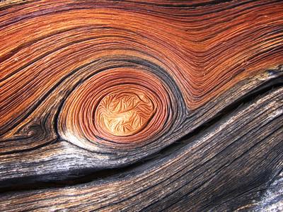 White bark pine wood, Sawtooth National Forest, Idaho