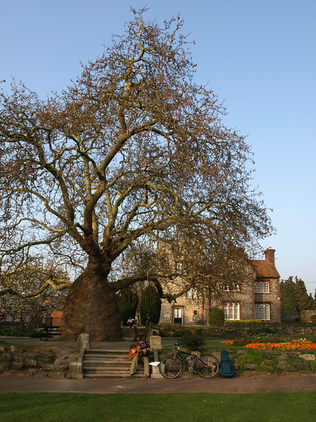 Westgate Gardens Canterbury 13