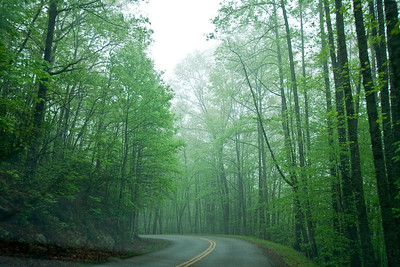 The misty trees and road in Pine Mountain State Park, Kentucky.