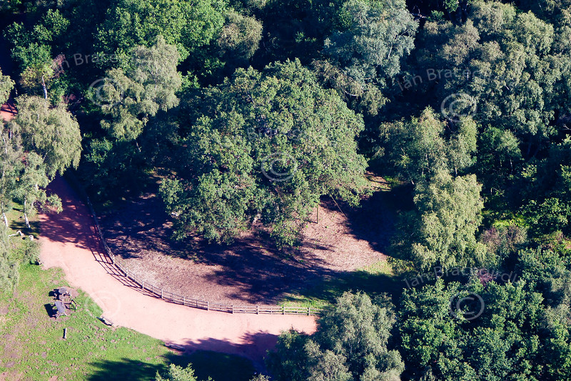 Aerial photo of The Major Oak in Sherwood Forest near Edwinstowe in Nottinghamshire. The tree said to be Robin Hood's hideout.
