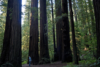 Standing among giants.  Avenue of the Giants, Redwoods National Park