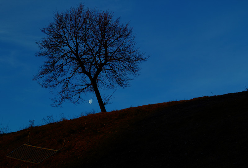 Leafless Tree after riot