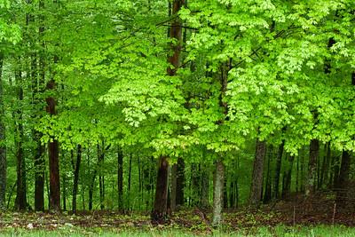 Beautiful trees on Willie's farm