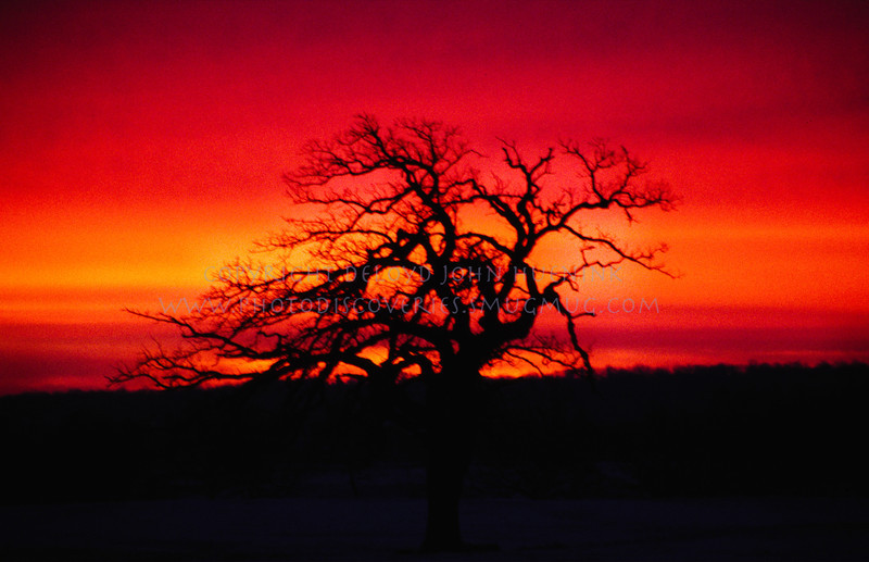 20070427-tree23