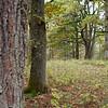 DA_20111003-130038