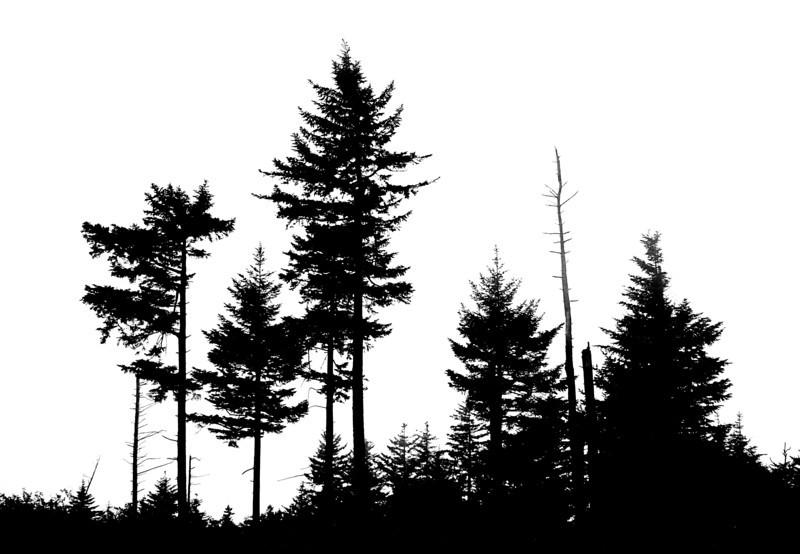 7365 Trees & Fog BW HC