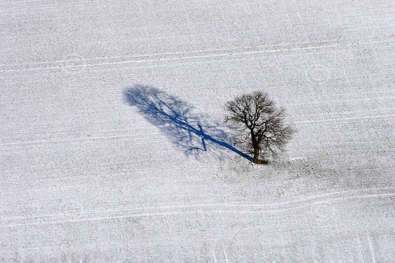 Aerial photo of a single tree in snow.