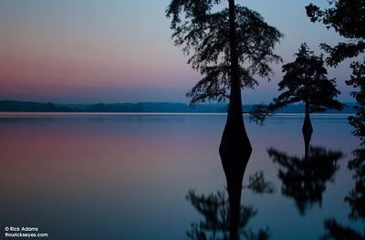 As the sky lightened before sunrise, these trees took shape with their reflections now visible, too.