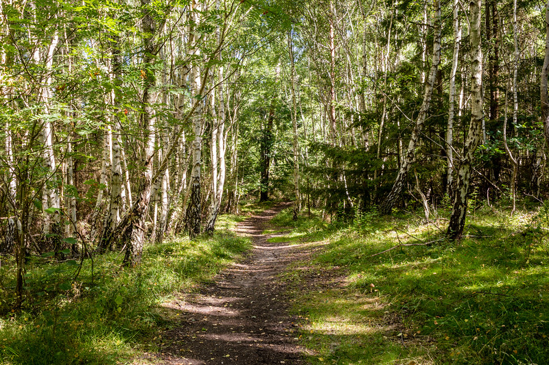 Tisvilde Hegn forest path