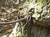 Cable around tree - South stairs - Tallulah Gorge April 8, 2007