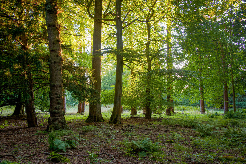 English Forest on Swinton Estate