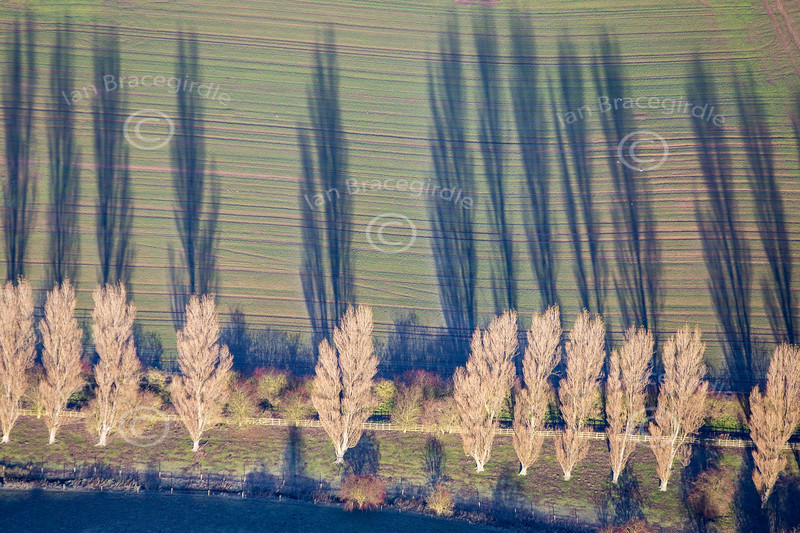 Aerial photo of trees and long shadows.