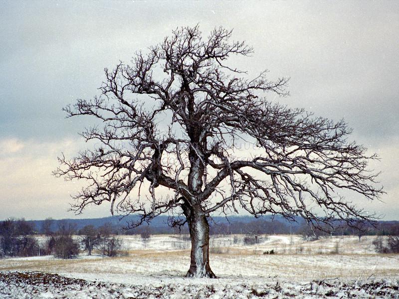 20060207-tree14