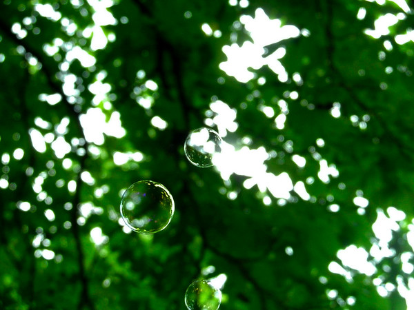 Tree with Bubbles 2