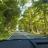 English Tree-lined Road