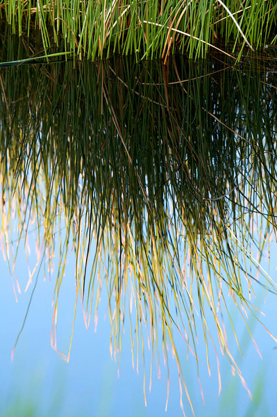 river, reeds, grass, mountains, Sierras
