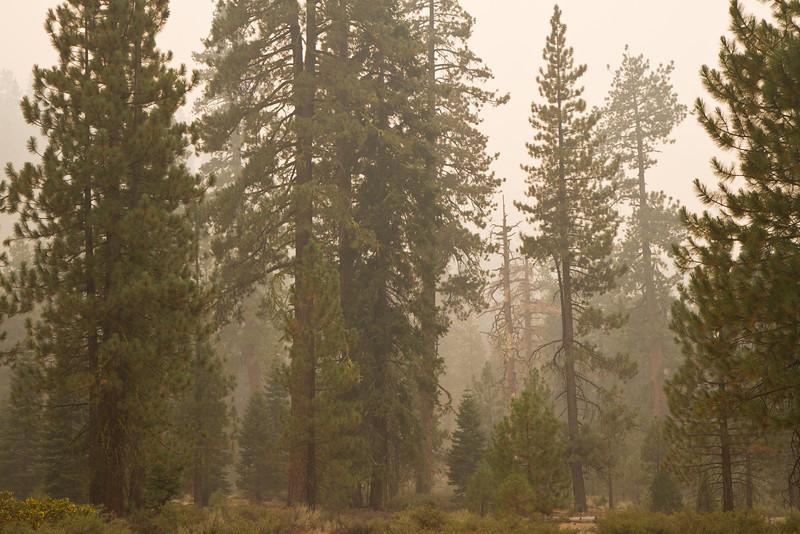 Smoke Trees