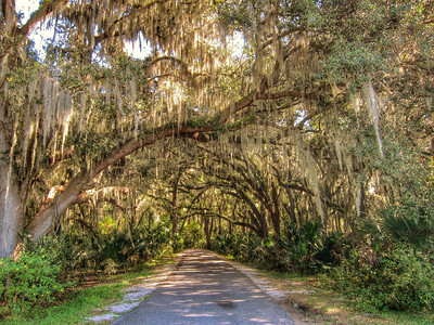 Gemini Springs, Debary, Florida. © Nora Kramer Photography, 2013.