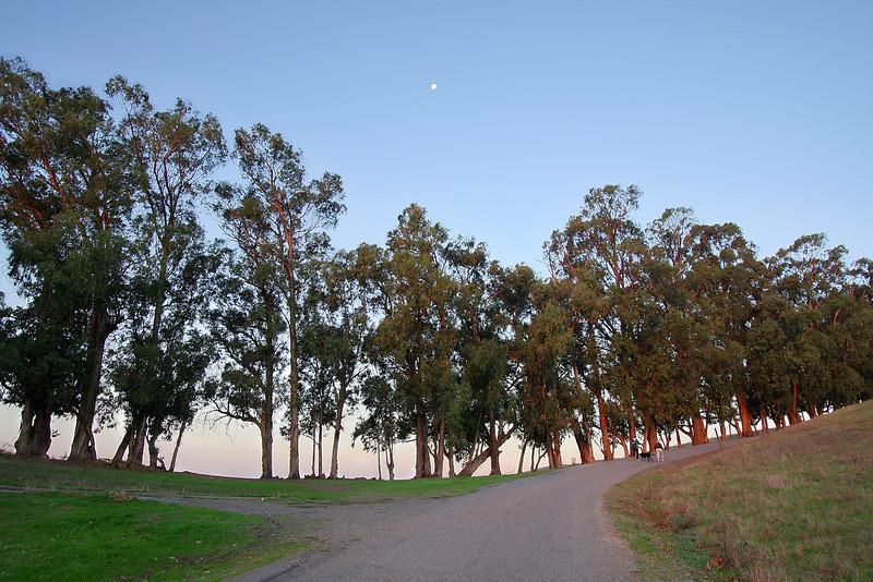 Eucalyptus Line