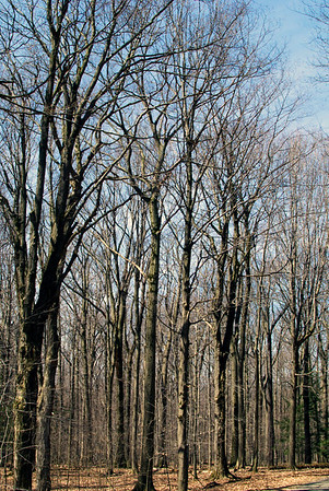 Trees in Chestnut Ridge Park