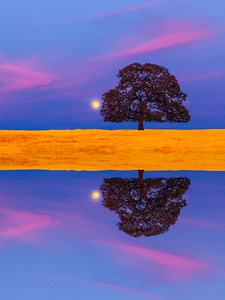 "An artistic reflection of a full moon rises behind a stately oak tree on the Millville Plains, Millville, CA. An ""oil paint"" effect has been rendered to the lower half of the image. This format looks stunning when gallery-wrapped on giclée canvas."