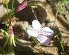 white flower four petals_P109069