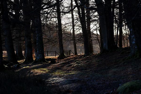 Tromtö naturreservat 2 jan. 2017