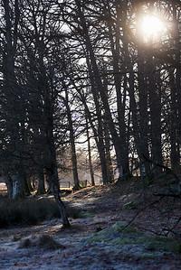 Tromtö naturreservat